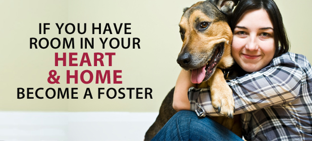How To Adopt Dogs From Houston